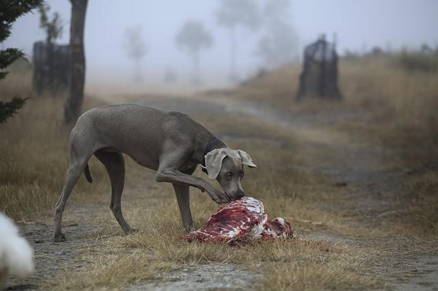 pes u zdechliny