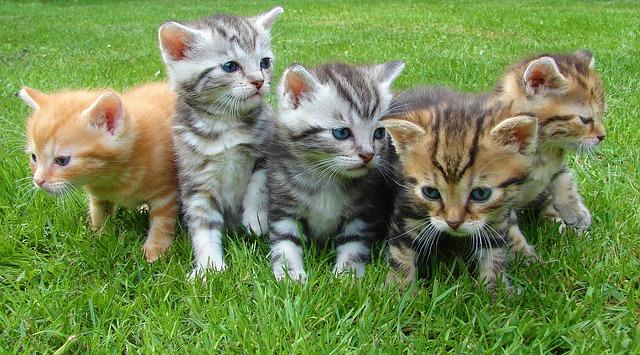 krásná koťátka