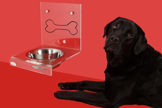 pes čekající u misky