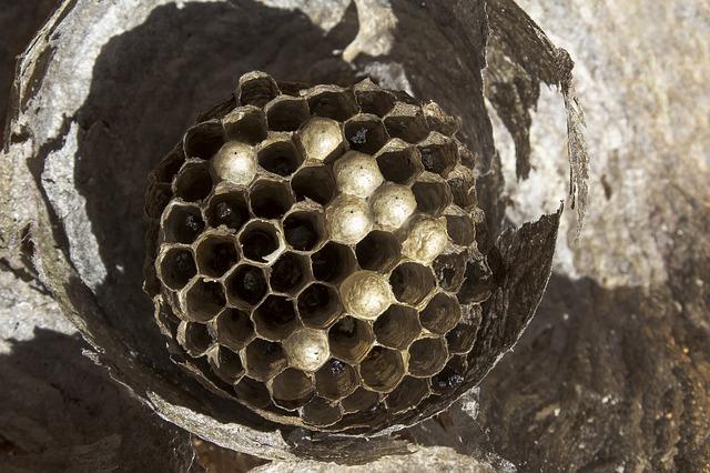 vysušené hnízdo