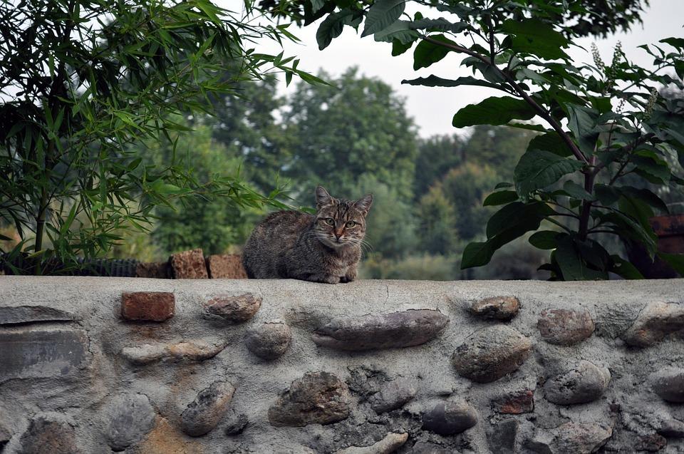 kočka na zdi